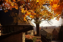 Fall at the Courthouse