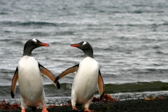 You and Me, Deception Island, Antarctica