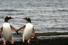 You and Me, Deception Island